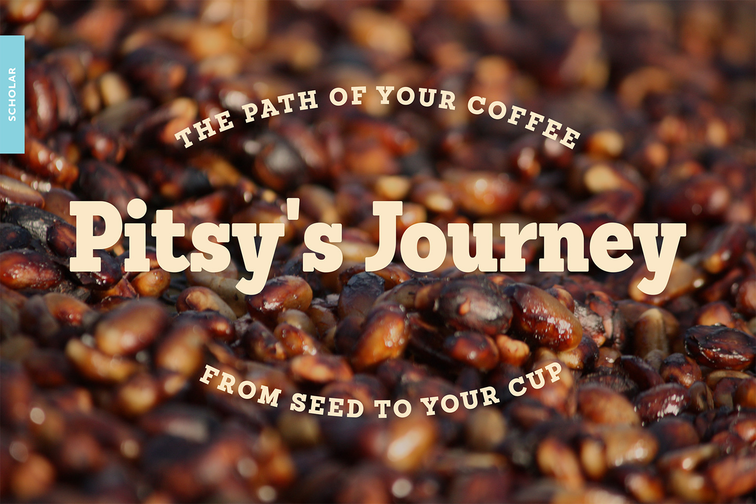 seed to cup - the story of coffee